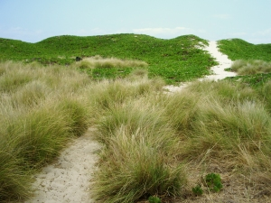 The Trail to Makalawena Climbs Over the Final Sand Berm to the Beach: Photo by Donnie MacGowan