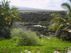 Golden Fresh Water Pond at Makalwena Beach: Photo by Donnie MacGowan