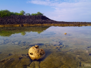Moning reflections at Hapaiali'i and Ke'eku Heiaus, Kona Coast: Photo by Donnie MacGowan