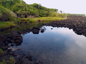 Hot Ponds Near Pahaoa in Puna District: Photo by Donald MacGowan