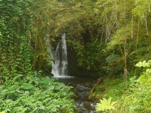Numerous Small Waterfalls Dot the Fern Grottos Around Akaka Falls: Photo by Donald MacGowan