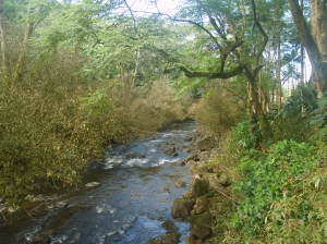 Kolekole Stream Near Kolekole Beach: Photo by Donald MacGowan