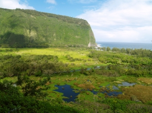 Waipi'o Valley, Hamakua Coast, Big Island of Hawaii: Photo by Donald MacGowan