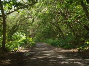 The Road in Waipi'o Valley: Photo by Donnie MacGowan