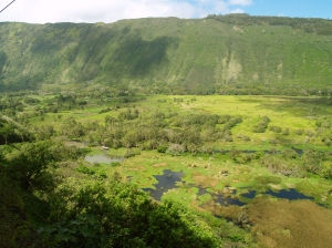 View Down into Waipio Valley Floor: Photo by Donnie MacGowan