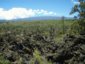 Mauna Loa Rises Above the Ka'u Desert at Warriror Footprints: Photo by Donald B. MacGowan