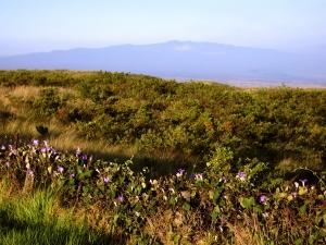 Hualalai Volcano from Saddle Road, Big Island Hawaii: Photo by Donnie MacGowan