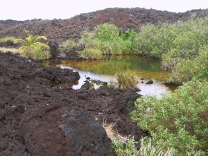 Golden Ponds at Ke-awa-iki Spring Amazingly from the Seeming Lifeless A'a Lava Flow: Photo by Donnie MacGowan