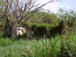 The Overgrown Walls of the old Kona Sugar Company Mill: Photo by Donald B. MacGowan