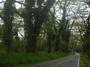 The beautiful Tree Tunneled Roads of Puna: Photo by Donnie MacGowan