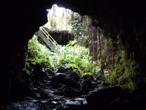 Looking Out Kaumana Cave: Photo by Donald MacGowan