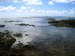 The Kapoho Tide Pools Offer a Unique, Fascinating Snorkeling Experience: Photo by Donnie MacGowan