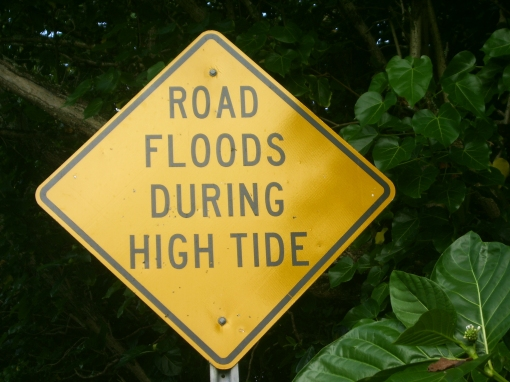 Pay Attention To Road Signs and Listen To Advice; Conditions In Hawaii Are Absolutely Unique, If Sometimes Screamingly Funny: Photo by Donald B. MacGowan