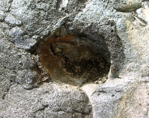 Lava Mold of a Coconut in Basalt from a Very Recent Flow Near Kalapana, Hawaii: Photo by Donald B. MacGowan