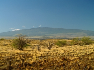 Hualalai Volcano and Sere Basal Grasslands of North Kona: Photo by Donnie MacGowan