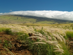 Looking Across Waimea at Kohala Volcano from Saddle Road: Photo by Donnie MacGowan
