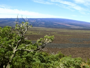 Looking West to Mauna Loa from the Top of Kipuka Huluhulu: Photo by Donnie MacGowan