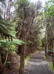Along the Kilauea Iki Crater Rim Trail: Photo by Donald B. MacGowan