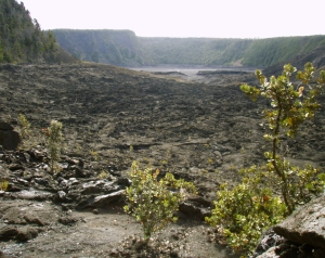 Looking Out of the Forest Across Kilauea Iki Crater: Photo by Donnie MacGowan