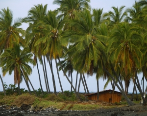 The area around Miloli'i and Honomalino Beach are infused with the je nais se quois of Old Hawaii: Photo by Donald B. MacGowan