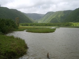During the Wet Season The Stream in Pololu Valley Turns Into a Seasonal Lake: Photo by Donald B. MacGowan
