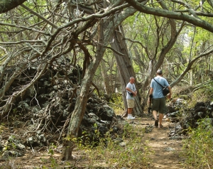 Hiking Back to Miloli'i You'll Be Glad of Sturdy Shoes to Fend Off the Huge Keawe Thorns: Photo by Donnie MacGowan