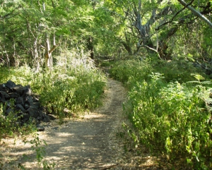 Ka'awaloa Village Path Near the Cook Monument: Photo by Donnie MacGowan