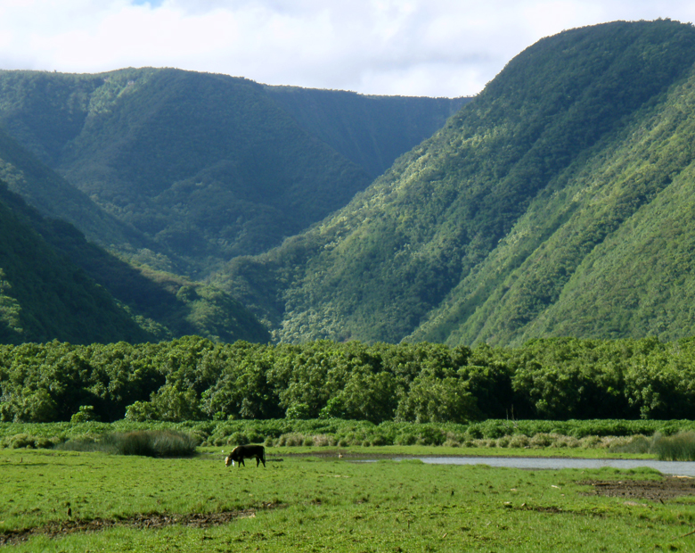Big Valley Ford >> Hiking Down Into Pololu Valley, Big Island of Hawaii | Lovingthebigisland's Weblog