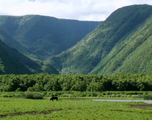 Pololu Valley Itself is Private Land so Stay Close To the Beach: Photo by Donald B. MacGowan