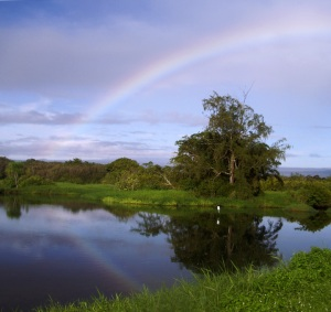 Rainbow at Lokawaka Fishpond, Hilo: Photo by Donnie MacGowan