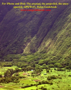 Taro Farms in Waipi'o Valley: Photo by Donald B. McGowan