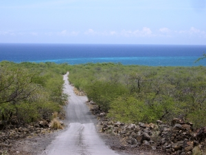 Dirt road into Kiholo Bay, just south of the 82 mile marker on the Hawaii Belt Road: Photo by Donnie MacGowan
