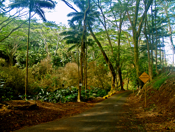Jungle road to Kolekole Beach Park, Hilo Hawaii: Photo by Donnie MacGowan |  Lovingthebigisland's Weblog
