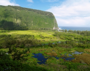Waipi'o Valley, just outside Honoka'a Town on the Hamakua Coast Hawaii Photo by Donnie MacGowan