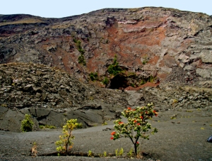 https://lovingthebigisland.wordpress.com/2010/03/06/exploring-hawaii-volcanoes-national-park-devastation-trail/