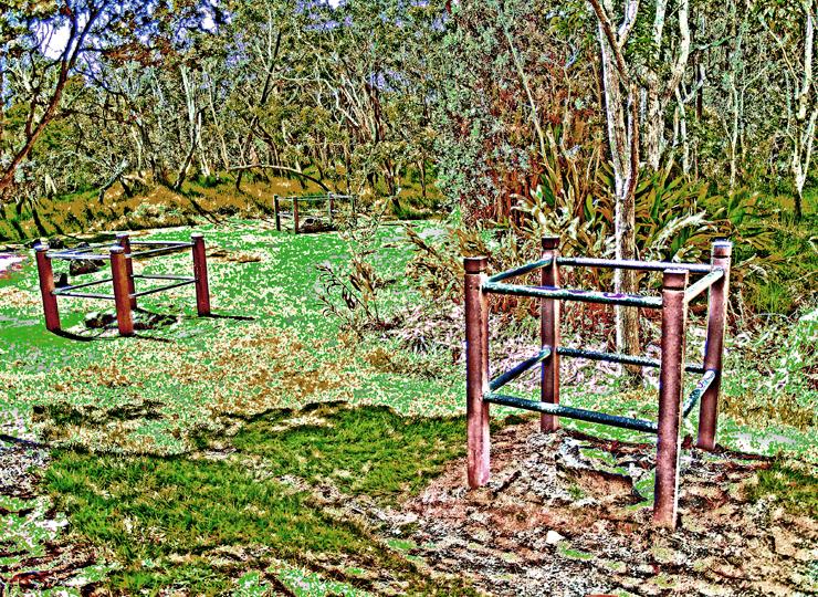 dry land forest | Lovingthebigisland's Weblog