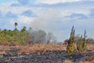 A forest fire burns hungrily where the lava stream is burning through the thick jungle kipuka: Photo by Donald B MacGowan